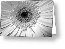 2134a2 Greeting Card