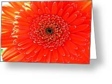 2153 Greeting Card