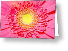 2154a1-003 Greeting Card