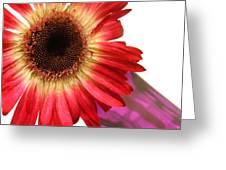 2184c-003 Greeting Card