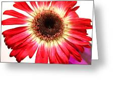 2188c-004 Greeting Card