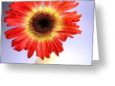 2221c1-002 Greeting Card