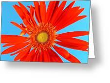 2277c2-007 Greeting Card