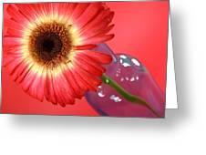 2399c-001 Greeting Card