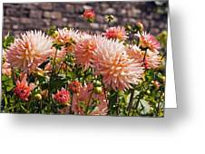 Dahlia Flowers Greeting Card