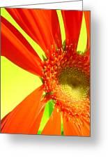 2506c1-003 Greeting Card