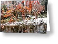 Autumn Snow Monongahela National Forest Greeting Card