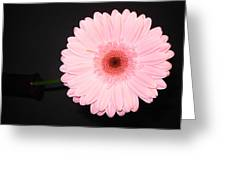 2741 Greeting Card