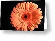 2743 Greeting Card