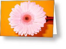 2833-0002 Greeting Card