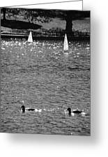 2boats2ducks In Black And White Greeting Card