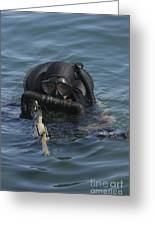 A Navy Seal Combat Swimmer Greeting Card by Michael Wood