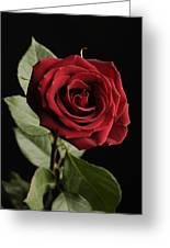 A Red Rose Rosaceae Greeting Card