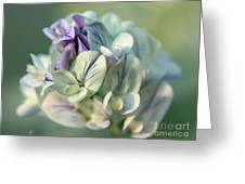 Alfalfa In Shades Of White Greeting Card