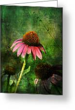 3 Amigos Echinacea Coneflower Grunge Art Greeting Card