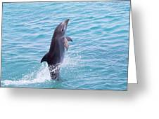 Atlantic Bottlenose Dolphin Greeting Card