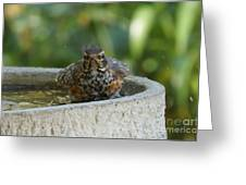 Bird Bath Fun Time Greeting Card