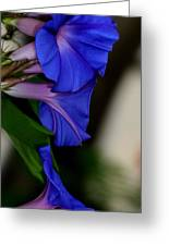 Blue Blooms Greeting Card