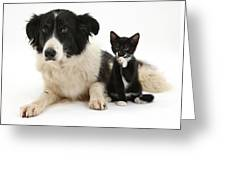 Border Collie And Tuxedo Kitten Greeting Card