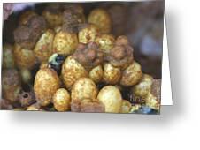 Bumblebee Nest Greeting Card