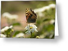 Butterfly On Blooming Flowers Greeting Card