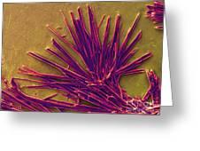 Caffeine Crystals, Sem Greeting Card