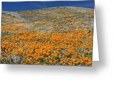 Californian Poppies (eschscholzia) Greeting Card by Bob Gibbons