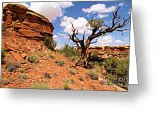 Canyonlands Needles District Greeting Card