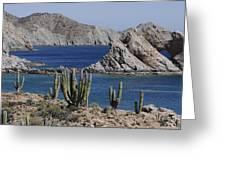 Cardon Pachycereus Pringlei Cacti Greeting Card