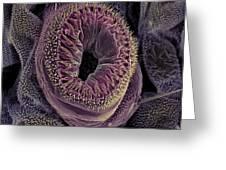 Caterpillar Foot, Sem Greeting Card