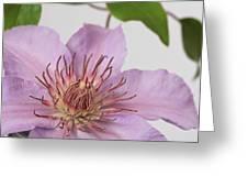 Clematis 'filigree' Greeting Card