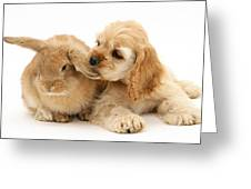 Cocker Spaniel And Rabbit Greeting Card