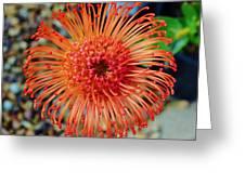 Common Pincushion Protea Greeting Card