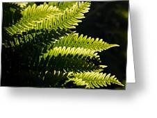 Common Polypody Greeting Card