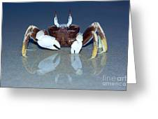 Crab On The Tropical Beach Greeting Card