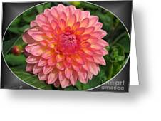 Dahlia Named Hillcrest Suffusion Greeting Card