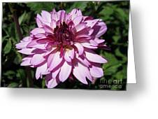 Dahlia Named Lauren Michelle Greeting Card