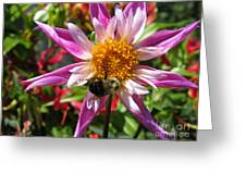 Dahlia Named Lorona Dawn Greeting Card