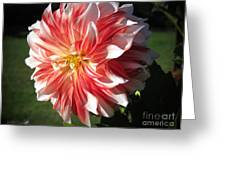 Dahlia Named Myrtle's Brandy Greeting Card