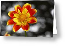 Dahlia Sun Greeting Card