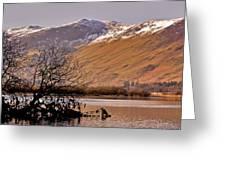 Derwent Water - Lake District. Greeting Card