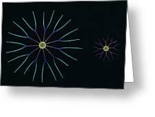 Diatom Algae, Sem Greeting Card