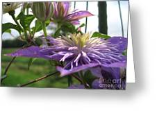 Double Clematis Named Crystal Fountain Greeting Card