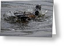 Duck Bath Greeting Card