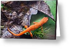Easterm Newt Nnotophthalmus Viridescens 2 Greeting Card