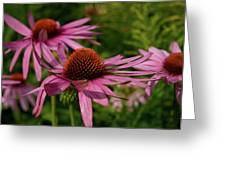 Eastern Purple Coneflower Greeting Card