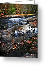 Fall Forest And River Landscape Greeting Card
