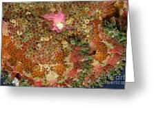 Fluorescent Sea Anemone Greeting Card