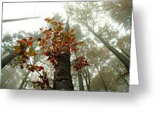 Foggy Autumn Beech Forest  Greeting Card