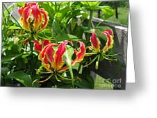 Gloriosa Named Rothschildiana Greeting Card